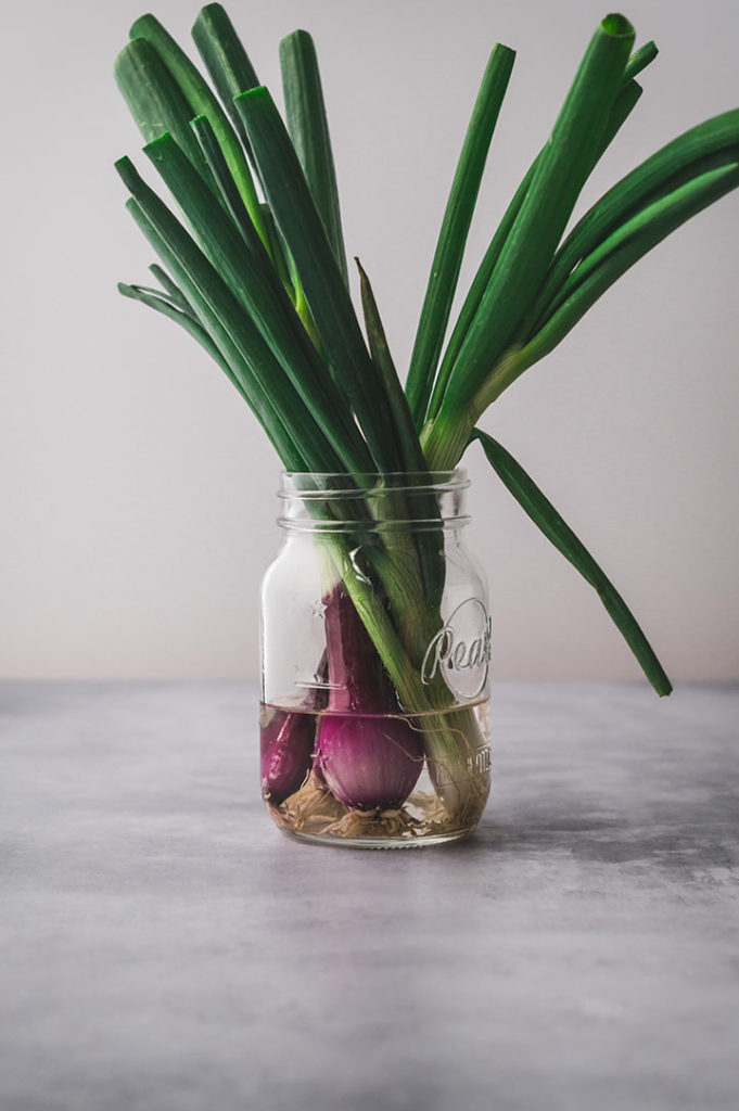 Frühlingszwiebeln in ein Glas Wasser